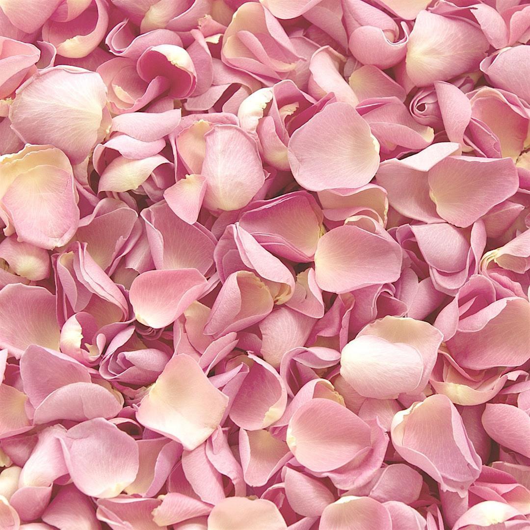 Il potere del rosa, a New York