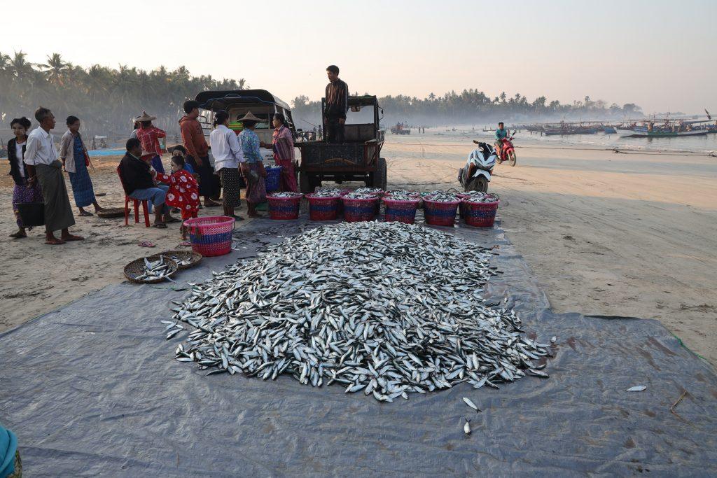 Pescatori, Ngapali, Myanmar