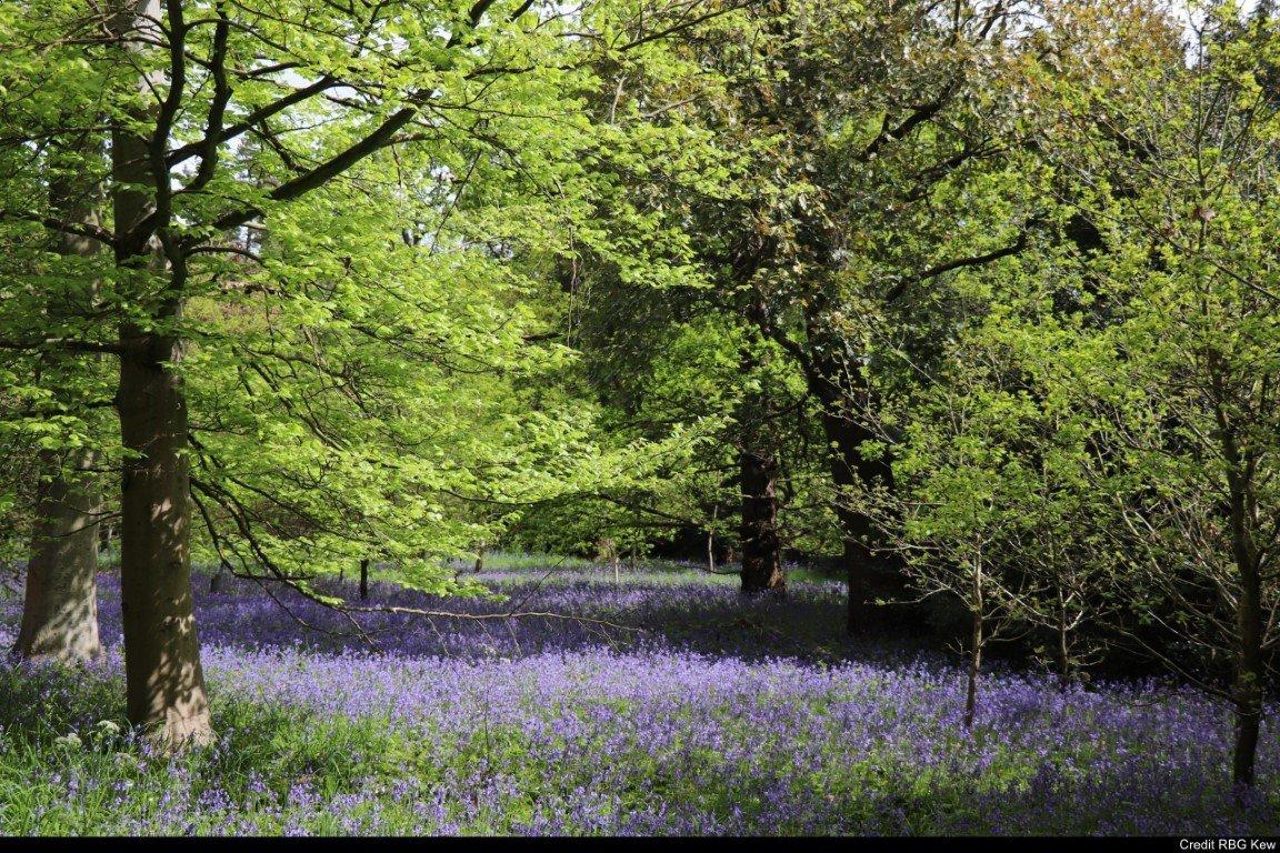 Il colore verde. Giro per i giardini più rilassanti d'Inghilterra